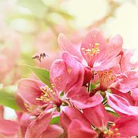 Отдушка Весенние Цветы, Spring Flowers|10 мл